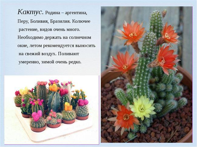 Про цветы - горшечные, садовые, кактусы, уход, советы, пересадка