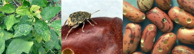 Профилактика жуков