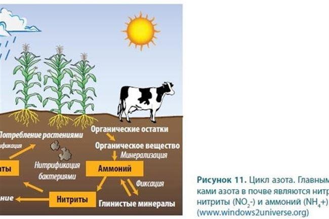 Контроль содержания азота в почве