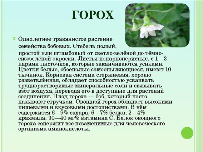 Описание лучших сортов гороха — по отзывам садоводов.