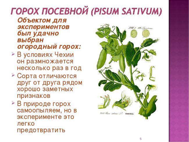 Посадка и размножение растения