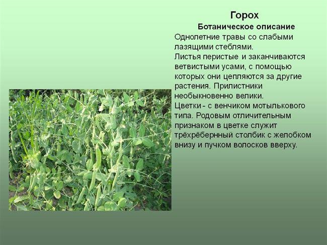 Классификация и ботаническое описание