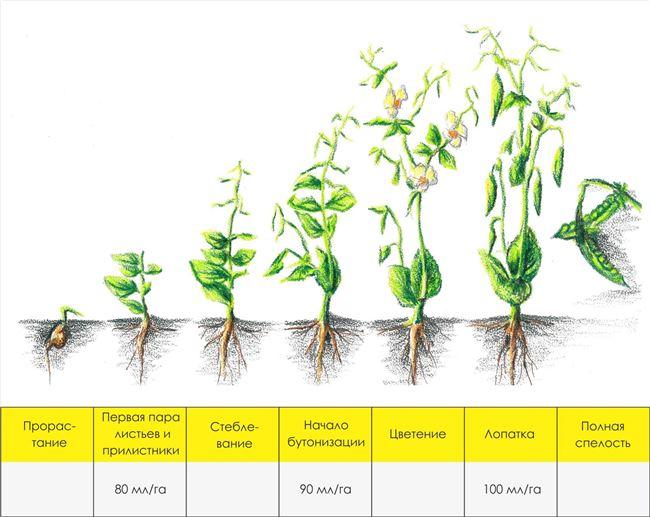 Подготовка грунта и семян к посадке