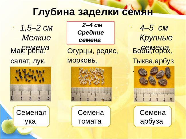 Про семена - сроки прорастания, хранение, характеристики, советы