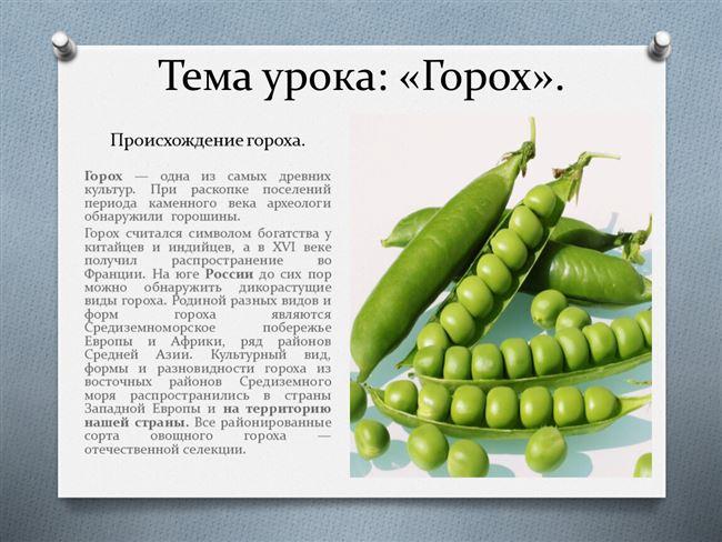 Условия, необходимые для выращивания гороха