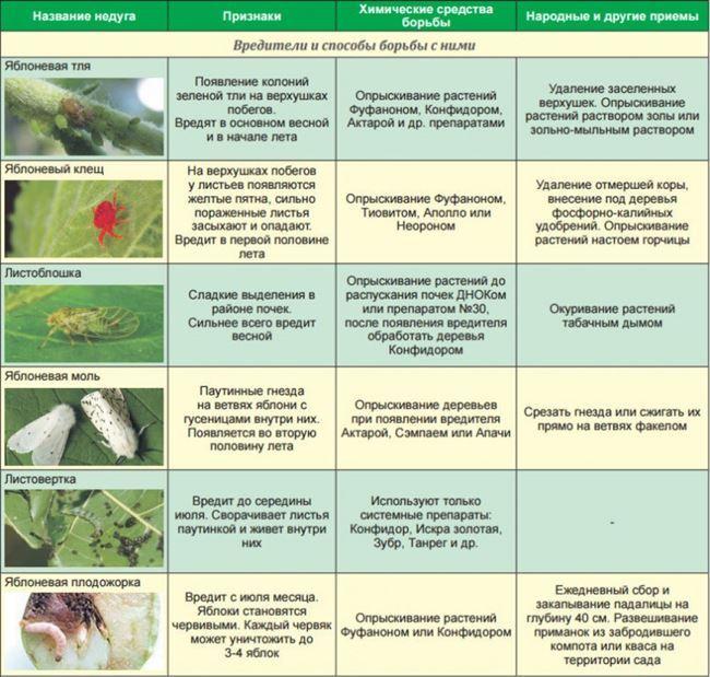Основные болезни и вредители гороха