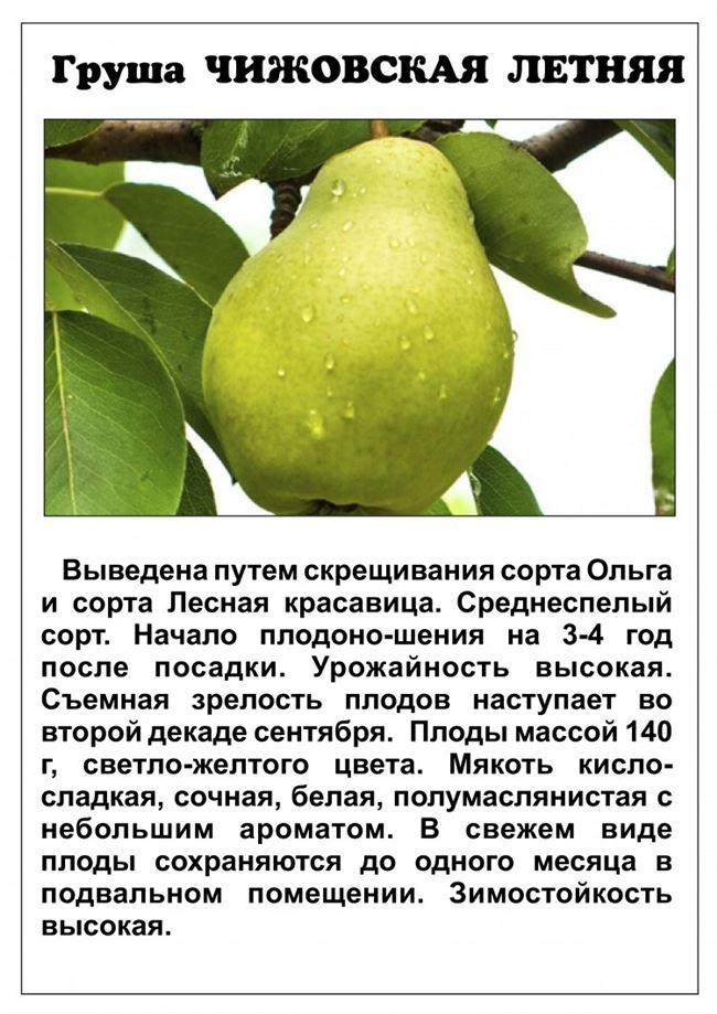 Какие удобрения вносить, чтобы груша лучше плодоносила?