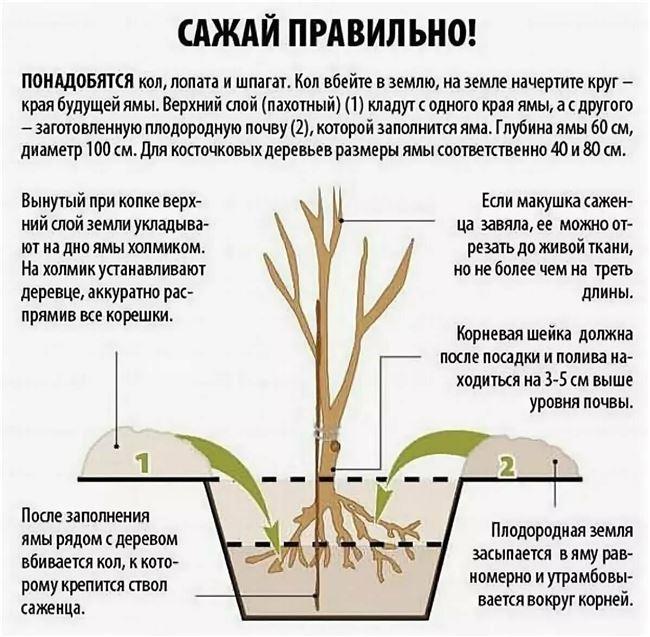 Последующий уход и выращивание саженцев
