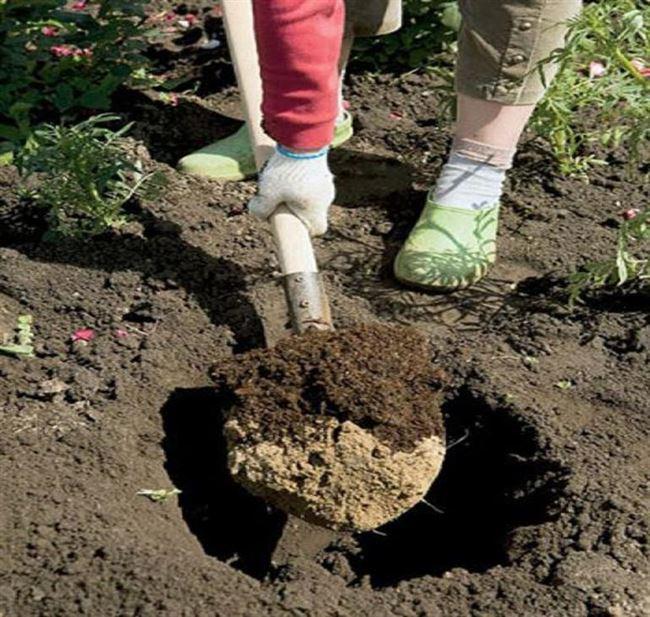 Как подготовить почву?
