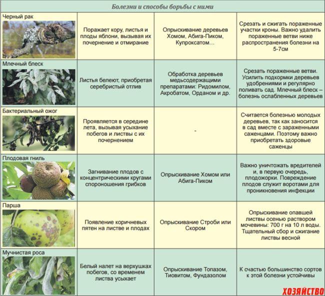 Профилактика болезней и вредителей