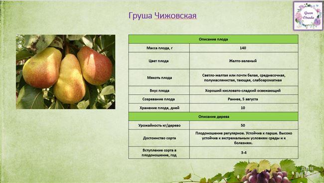 Особенности плодов