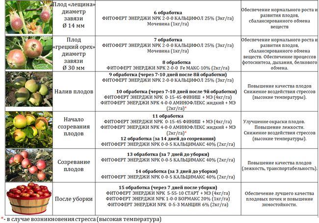 Схема удобрение и полива