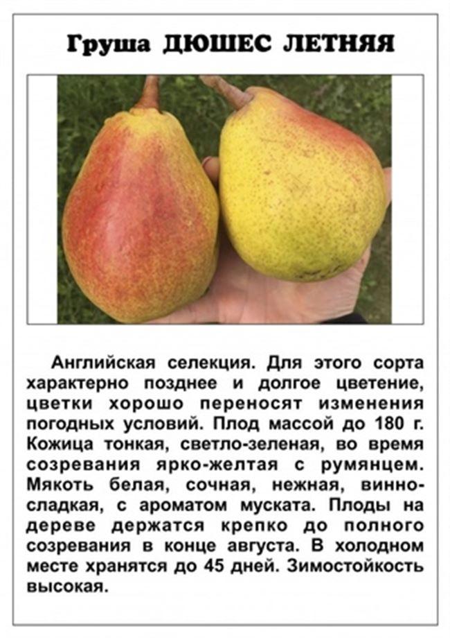 Характеристика дерева и плодов
