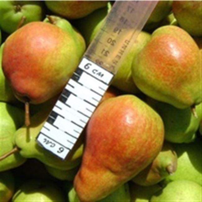 Сбор и хранение плодов
