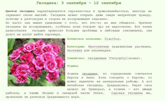 Розанная зеленая тля. Описание и меры борьбы