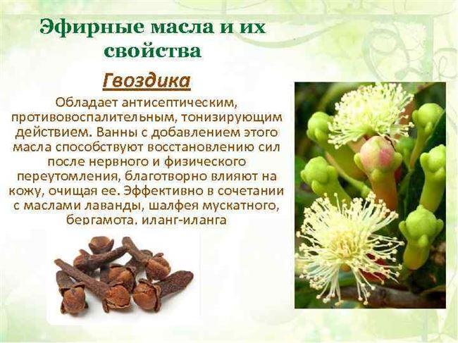 Сорт яблок Титовка. Описание и характеристика
