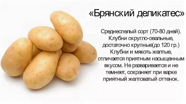 Посадка сорта картофеля Брянский деликатес