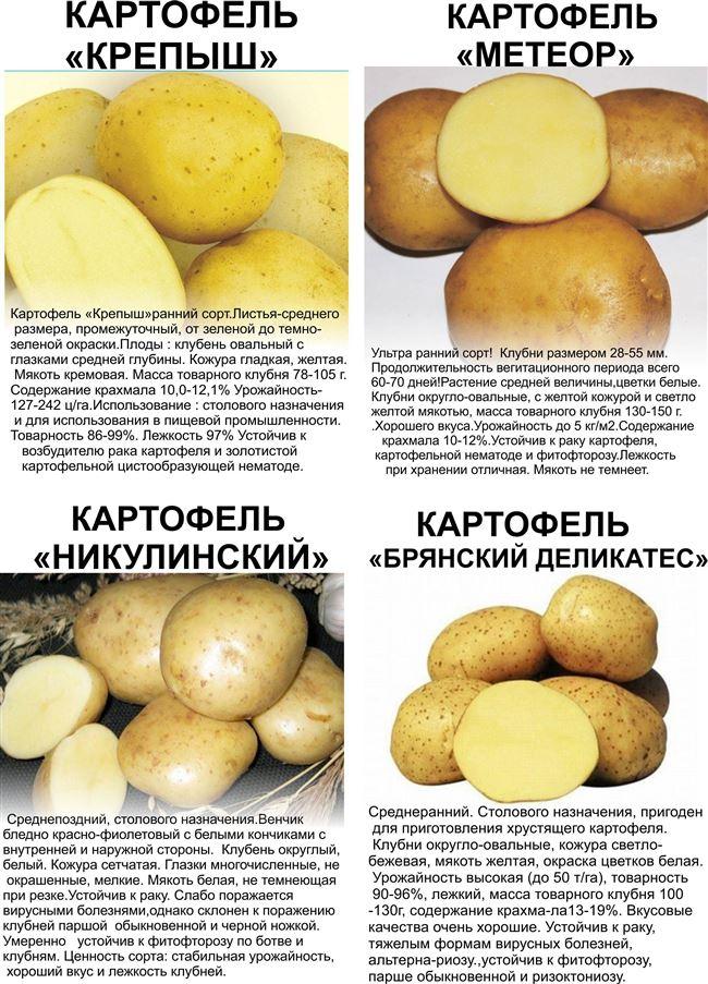 Болезни и вредители сорта картофеля Брянский деликатес