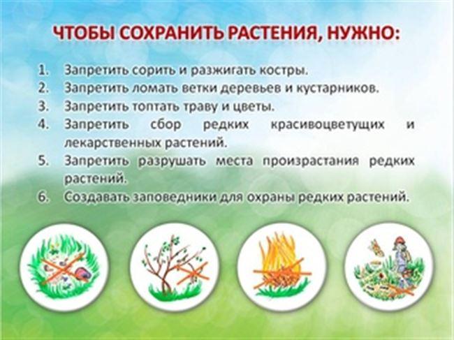 Защита природы - сохранение видов - охрана животных: