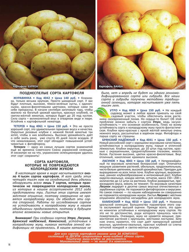 Элитные сорта картофеля — таблица с описаниями