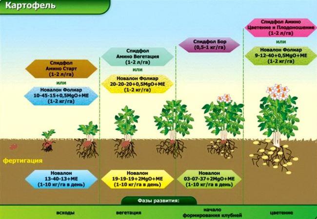 Общие правила внесения удобрений