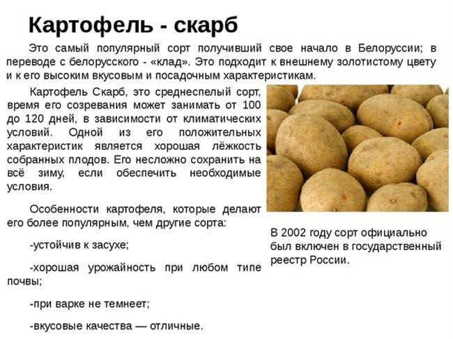 Плюсы и минусы сорта картофеля