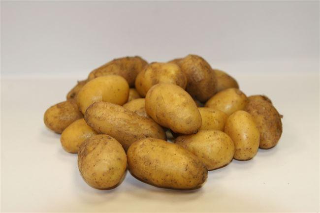Описание сорта картофеля Инноватор