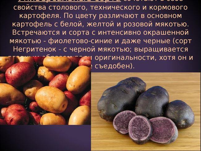 Картофель – описание овоща