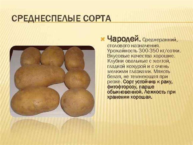 Картофель Банкир подходит и для пюре, и для жарки
