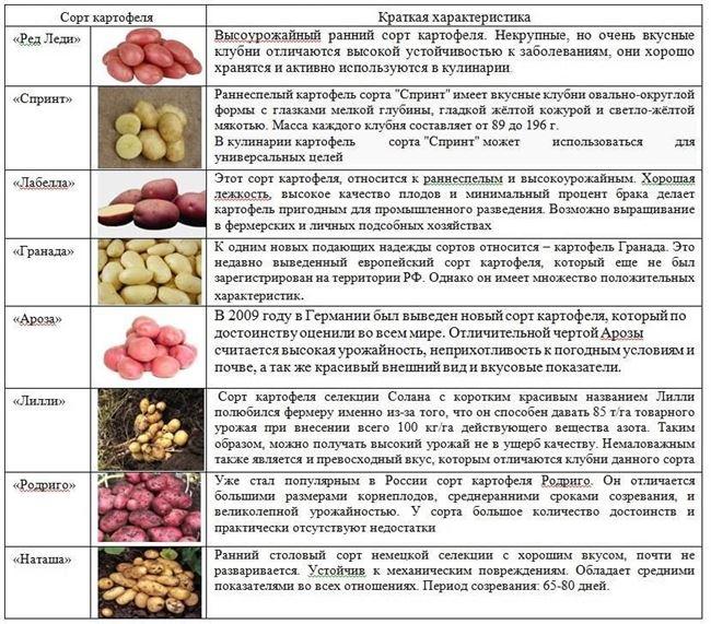Таблица: враги Невского