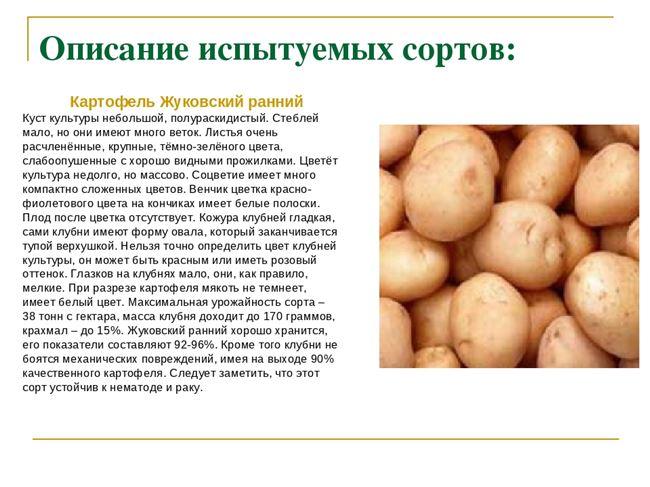 Характеристика сортов картофеля, включенных в