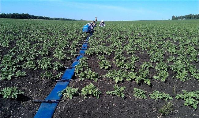 Орошение и рыхление почвы