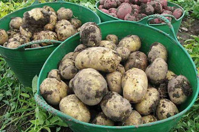 Сбор урожая и его хранение
