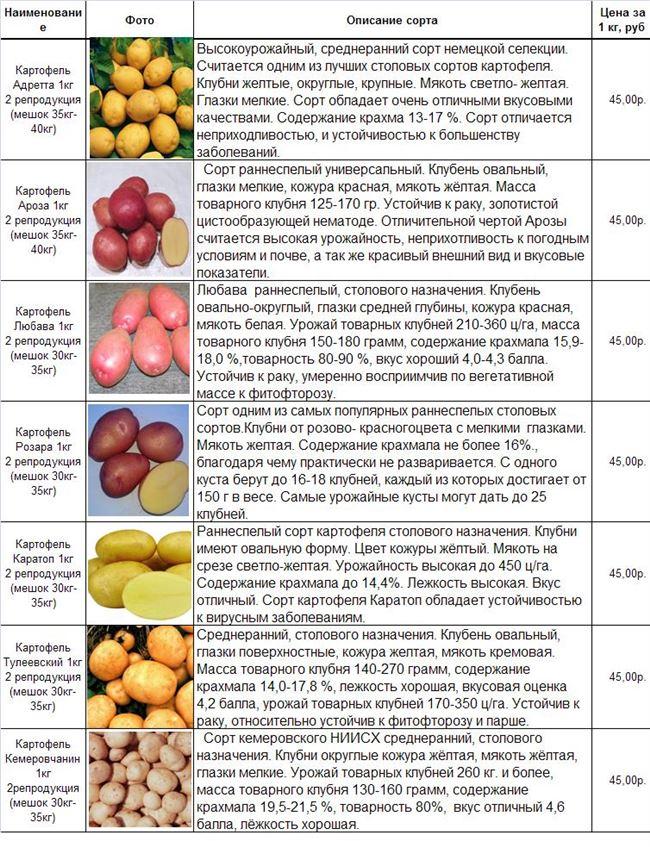 Описание, какие ранние, средние и поздние сорта картофеля подходят для Подмосковья