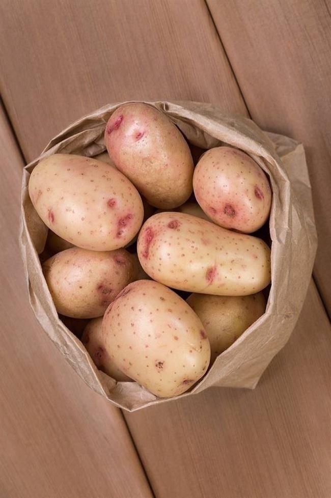 Описание лучших сортов картофеля — по отзывам садоводов