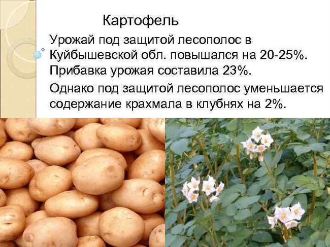Сбор, применение и хранение урожая