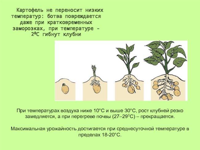 Подготовка посадочного материала и размножение