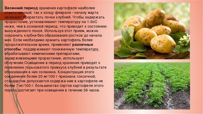 Правило 9. Совместное хранение овощей