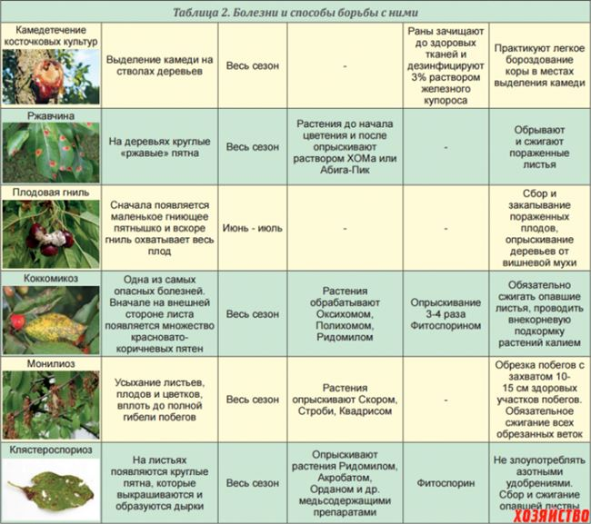Обработка и профилактика от болезней и вредителей