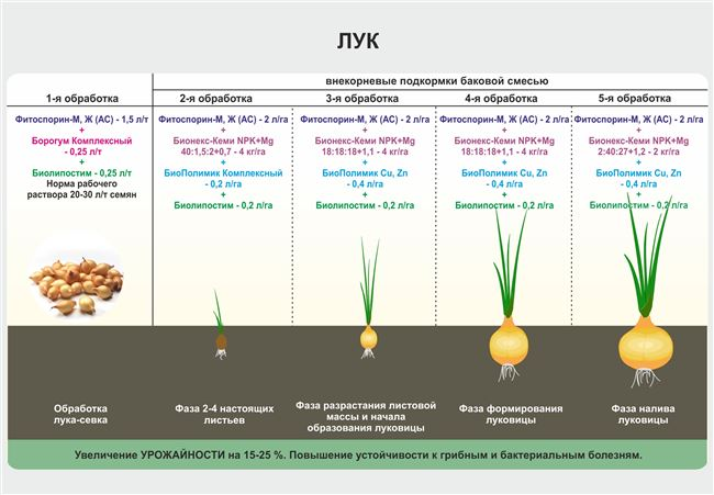 Стратификация и подготовка семян