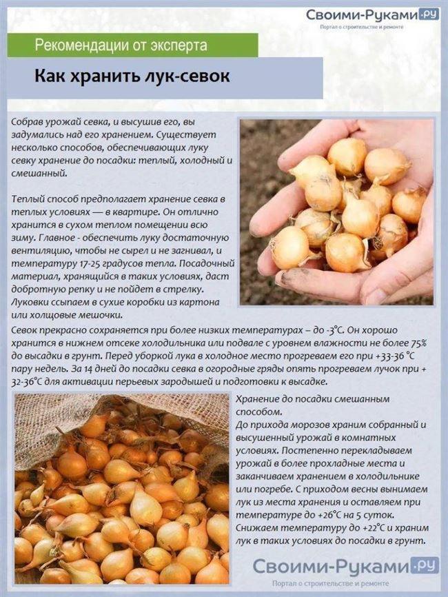 Процесс посадки севка в грунт