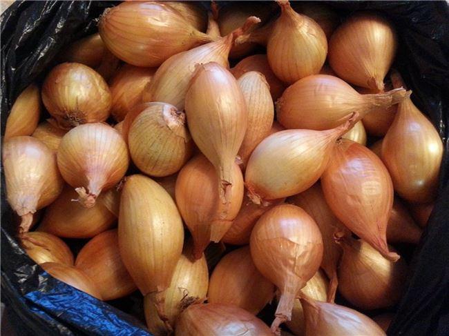 Как выращивают севок лук — особенности ухода