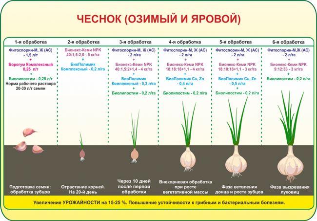 Размножение при помощи семян