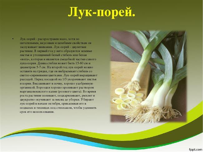 Размножение лука-порея