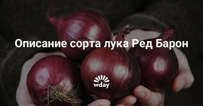 Полив