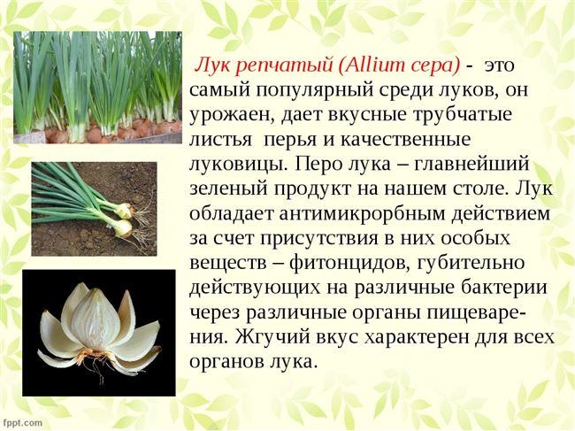 Ботаническое описание и происхождения