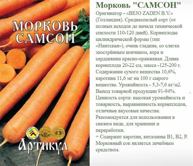 Описание сорта моркови Самсон