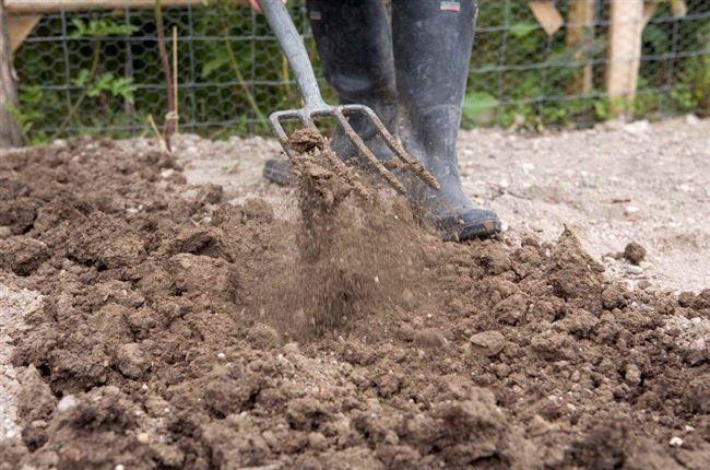 Выбор, подготовка участка и почвы