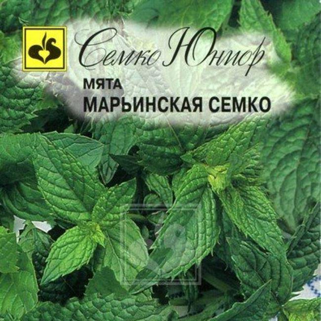 Описание мяты Марьинская Семко :