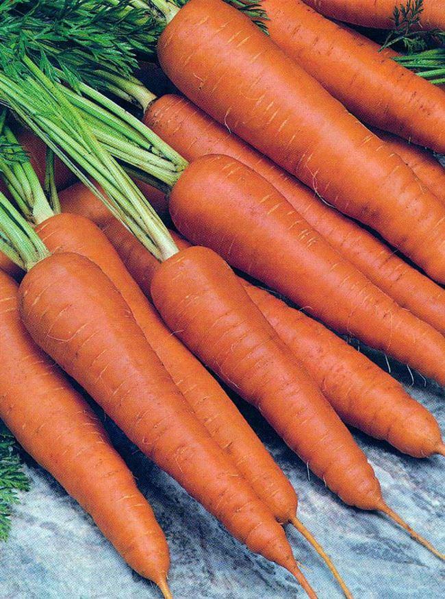 Переходные сортотипы моркови